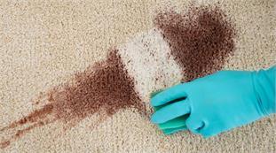 1 phút làm sạch thảm sofa đánh bay mọi vết bần